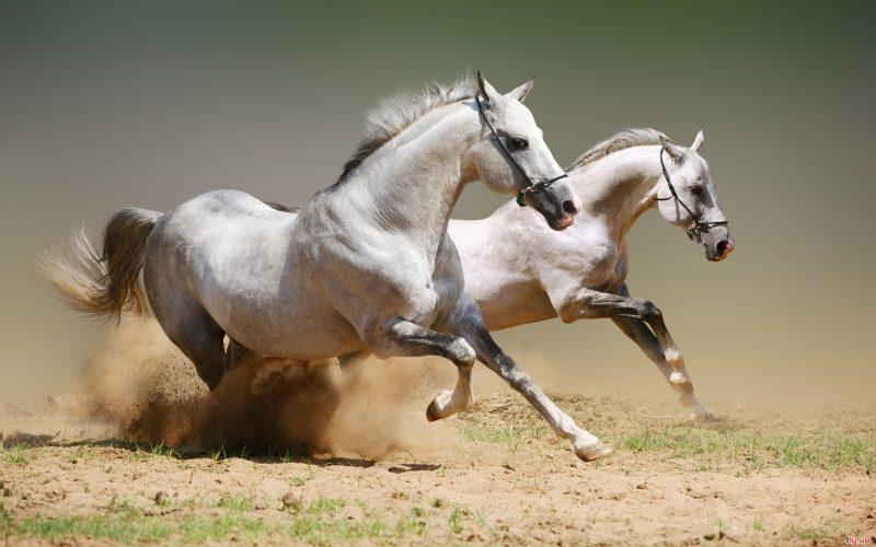 Hiệu ứng ruồi ngựa, trong 10 định luật làm giàu của người Do Thái